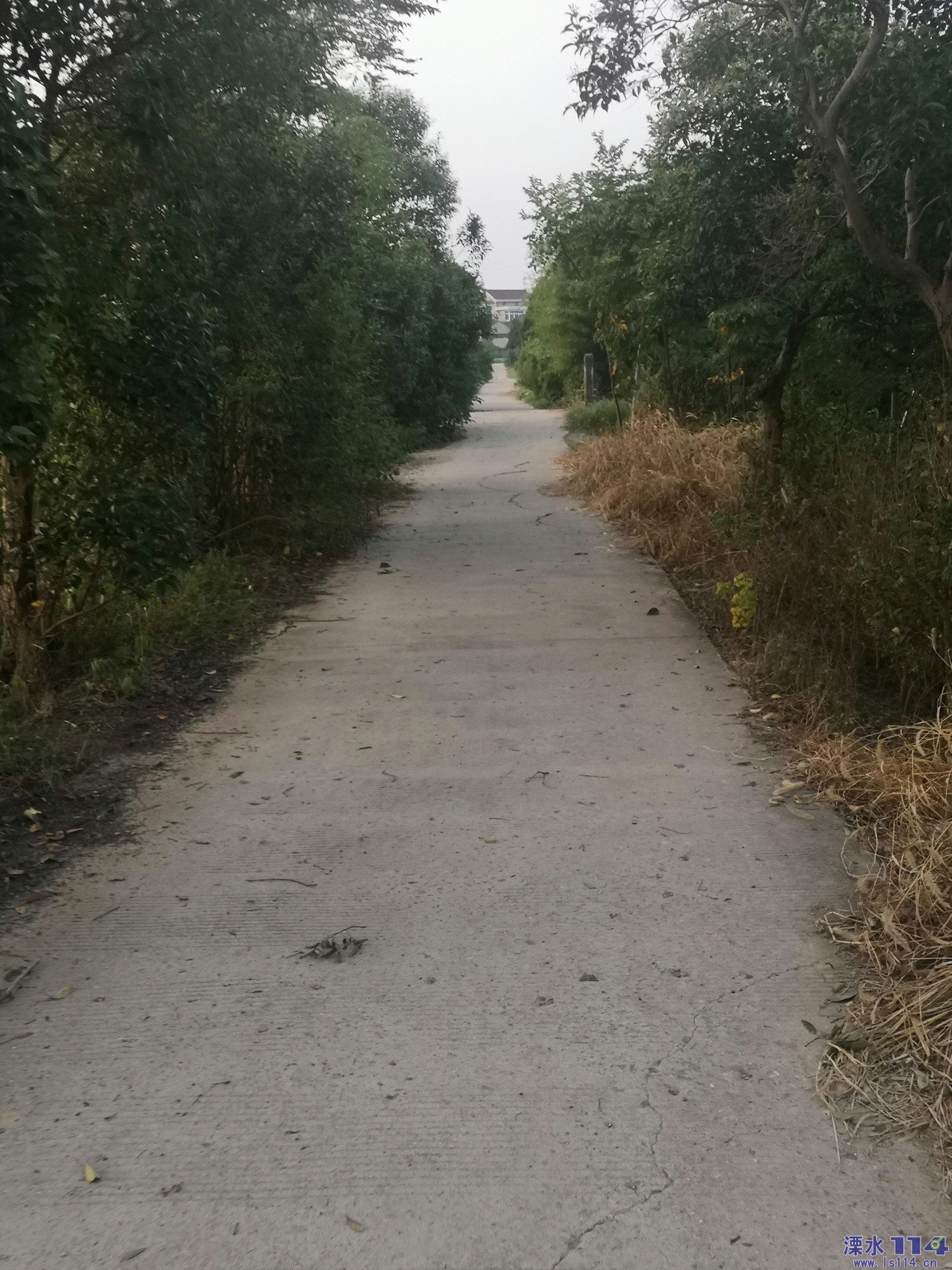 路两边的杂树,杂草谁来修剪